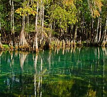 Cypress Tree Reflections by Robert H Carney