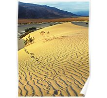 Footsteps-sand dune at dawn-Death Valley Poster