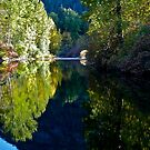 Skykomish River, Washington State by Scott Johnson