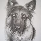German Shepard by Peter Lawton