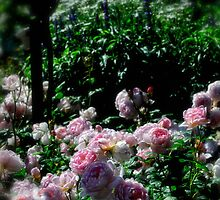 Rose Garden by Karen  Betts