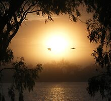 Pelican Dawn - Lake Curlew, NSW by Gregory McInnes
