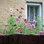 Woolmers window by Fizzgig7