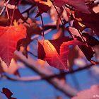 Ready to Fall... by Marcia Rubin