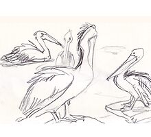 More Pelicans by WoolleyWorld