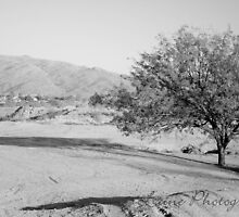 Black and White Sparse Desert by LainePhotog