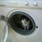Boo In Washing Machine by Tara Lea