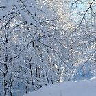 Snow-laden trees by intensivelight