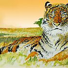 tiger tiger in amber light by brianjarvis