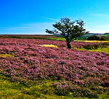 Hawnby Moor #2 by Trevor Kersley