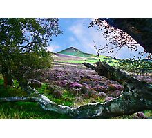 Hawnby Moor #7 Photographic Print