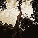 tree by Amagoia  Akarregi