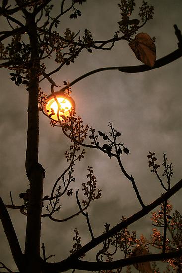 Urban moon by Clo Sed
