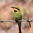 On the look out ... Rainbow Bee-eater by Kerryn Ryan, Mosaic Avenues