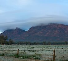 Wilpena Frost by Matt Harvey