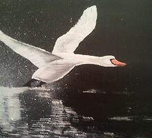 The Night Swan by Andrew Howard