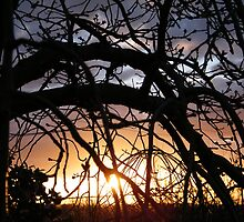 sunset from templestowe by madcorey