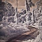 An IR Adventure by Craig Hender