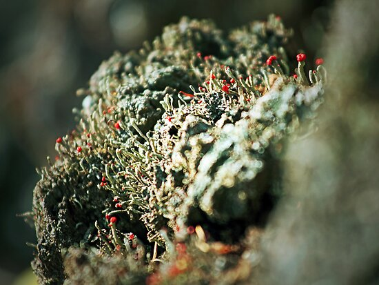 Lichen Bokeh by Aaron Campbell
