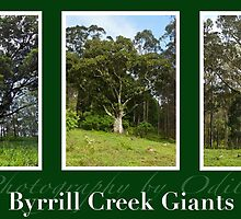 Byrrill Creek GIants by Odille Esmonde-Morgan