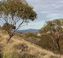 Gawler Ranges 1 by Cheryl Parkes