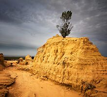 Standing tall - Lake Mungo by Hans Kawitzki