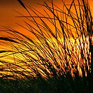 Grass in the Sunset by Xcarguy