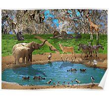 Animals kingdom Poster