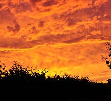 Vineyard Sunset by melcarwana