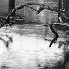 Dead Tree by Geoff Smith