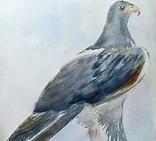 Visit the Black Eagles at Walter Sisulu by Maree  Clarkson