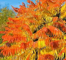 Bush on Fire by Elaine123