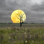 Moonlight by buttonphoto
