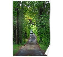 Driveway glade-Entrance to old winery,Orange NSW Poster