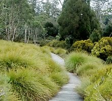 The Enchanted Walk,Cradle Mountain,Tasmania, Australia. by kaysharp