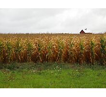 Cornfield and Farmhouse Photographic Print
