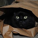 Gift Wrapped Cat by maryevebramante