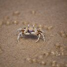 Crab on Mooloolaba Beach No. 1 by Helen Barnett