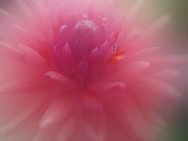 Pink Stands for Courage by enchantedImages