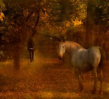 Come, follow me............... by hampshirelady