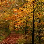 Autumn Collection -  Woodland Walk 4 by Lorraine Parramore