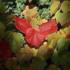 Those Autumn Leaves..... by Sandra Cockayne
