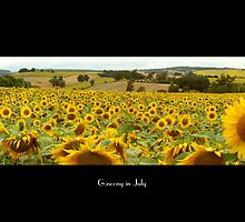 Sunflower Field in Gascony, France by Robert  Abramson