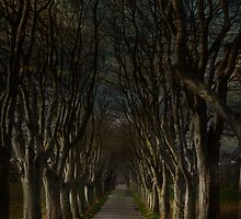 Rowan Avenue by Christian Hartmann