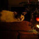 Christmas Cat by vbk70