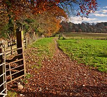 Autumn in the Ribble Valley by Shaun Whiteman