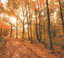 Ashdown Forrest in Autumn by Eddie Howland
