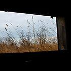 Dark Window by Christina Apelseth
