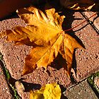 Fallen Maple Leaf by BlueMoonRose