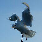 The bird (detail) by Lydia Cafarella